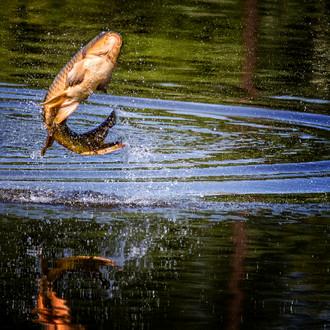 Chcete čistou vodu v rybnících? Pak nepomůže vyhnat rybáře a přestat chovat kapry, říká Jindřich Duras